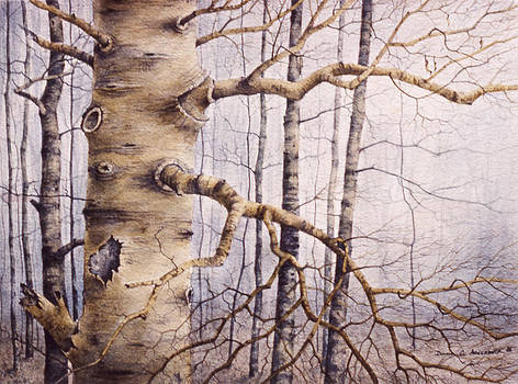 Branching Poplar by Pederbeck Arte Gruppe