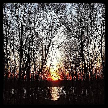 Branchy Sunset by Cody Dill