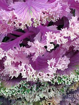 Brassica oleracea 3 by Elizabeth Matlock
