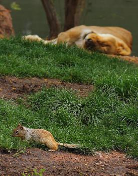 Brave Little Squirrel by Old Pueblo Photography