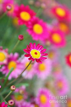 Bread feeds the body indeed but flowers feed also the soul by Fir Mamat