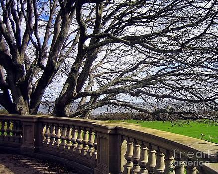 Kate McKenna - Breakers Mansion Tree