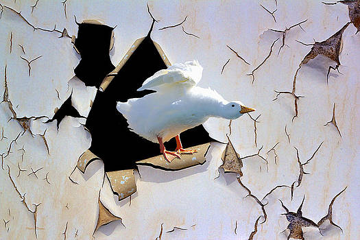 Breakout by Phyllis Denton