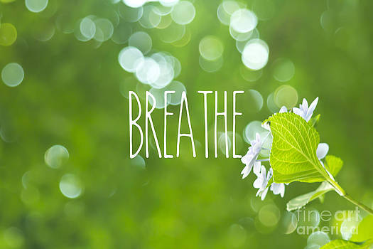 Beverly Claire Kaiya - Breathe Refreshing Hydrangea Green Leaves and Bokeh