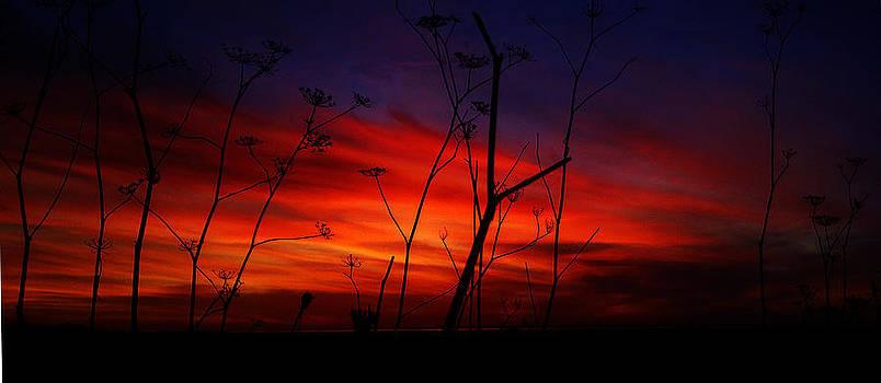 Breathe by Robert Walker