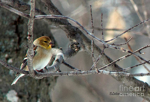 Breeding Plumage in the Works by Brenda Leitow