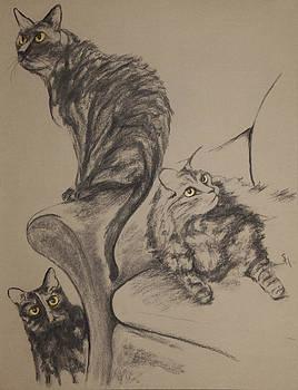 Brenda's Three Cats by Jocelyn Paine
