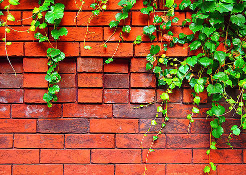 John Cardamone - Brick and Ivy