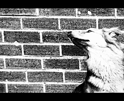 Isabella F Abbie Shores - Brick By Brick