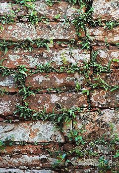 Vivian Christopher - Brick Wall Detail Argentina