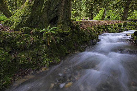 Paul W Sharpe Aka Wizard of Wonders - Bridal Falls Park in Spring