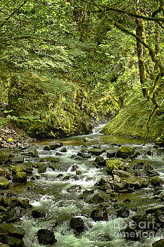 Bridal Veil Creek by Carrie Cranwill