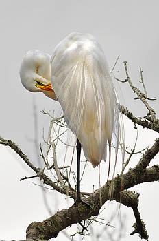 Bride of Magnolia by Donnie Smith