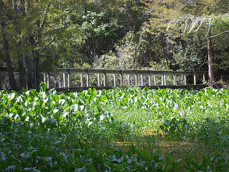 Bridge Across the Water Hyacinth by Shere Crossman