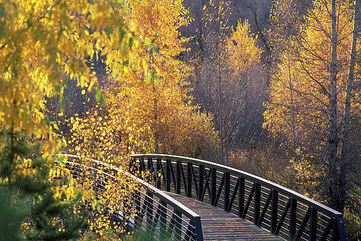 Bridge And Trees In Autumn Steamboat by Vintage Images