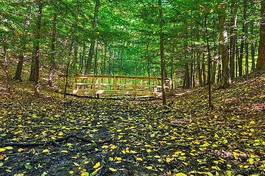 Bridge in Gosnell Big Woods by Tim Buisman