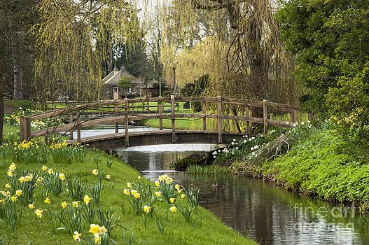 Bridge of Delight by Donald Davis