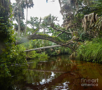 Bridge Over the Water  by Denise Ellis