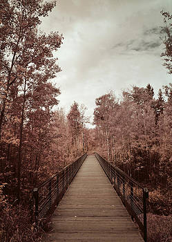 Bridged by Larysa  Luciw