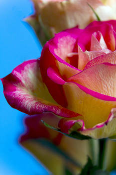 Bright and Beautiful Rose by Dana Moyer