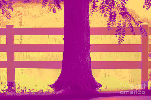 Bright and Colorful Fence and Tree by Robert D  Brozek