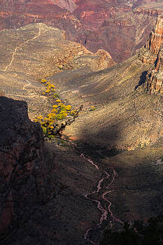 Bright Angel and Plateau Point Trails by Ed Gleichman