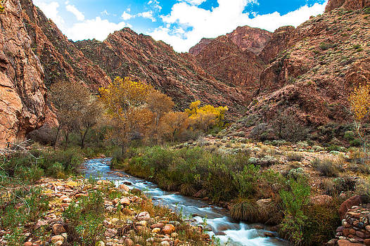 Bright Angel Creek by Steve Burns