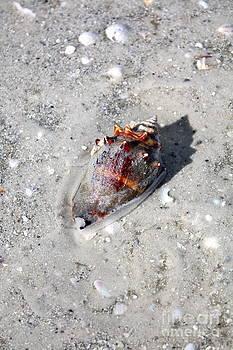 Danielle Groenen - Bright Conch Shell