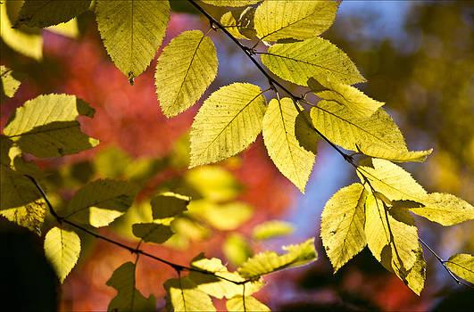 Arkady Kunysz - Bright fall colors