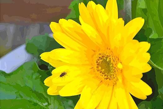 Bright Flower by Michael Sokalski