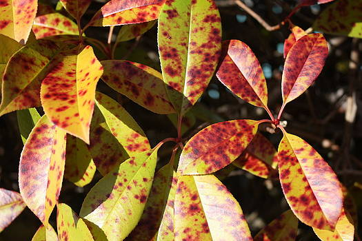 Bright Leaves by Mark Cheney