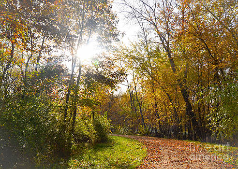 Bright Path by Catherine Hill