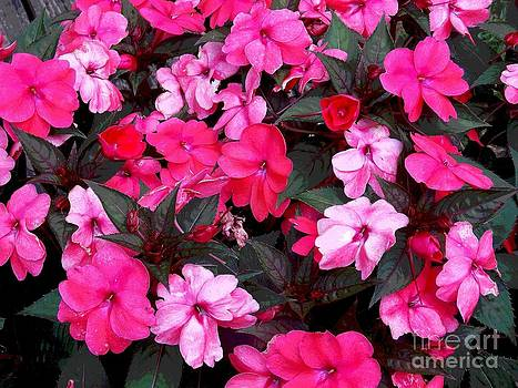 Bright Pinks by Annette Allman