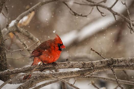 Scott Bean - Bright Red