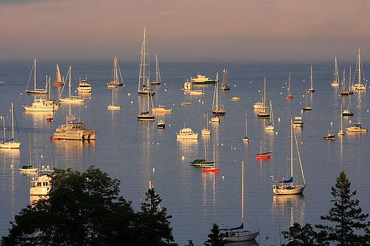 Bright Reflections on a Busy Harbor by Dana Moos