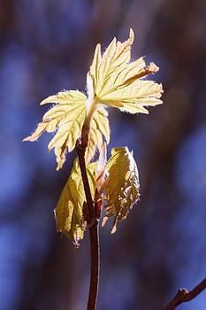 Dawn Hagar - Bright Shiny Spring