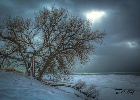 William Reek - Bright Spot
