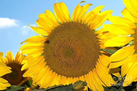 Bright Summer Sun by Lisa Holmgreen