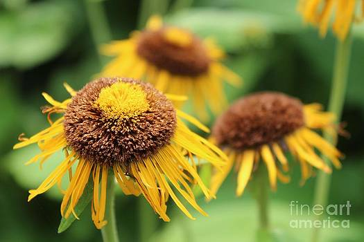 Bright Yellow Flowers by Bailey Mowser