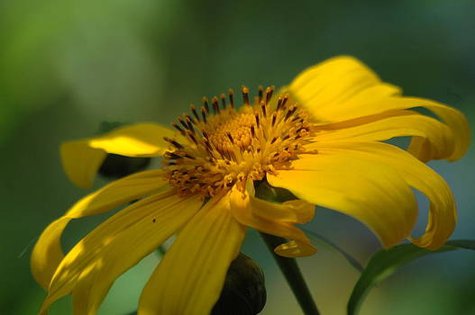 Bright Yellow by Sheri Heckenlaible