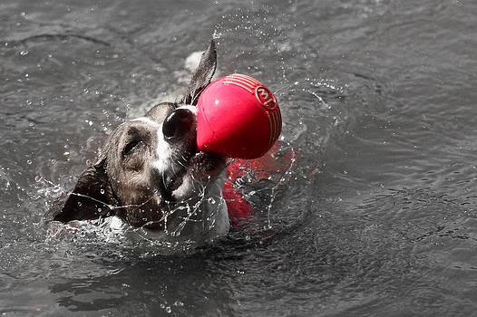 Brigit's Ball by Soccer Dog Design