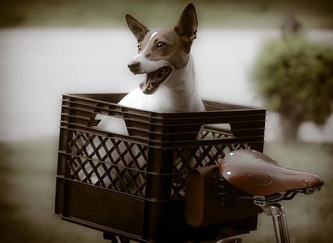 Brigit's Basket by Soccer Dog Design