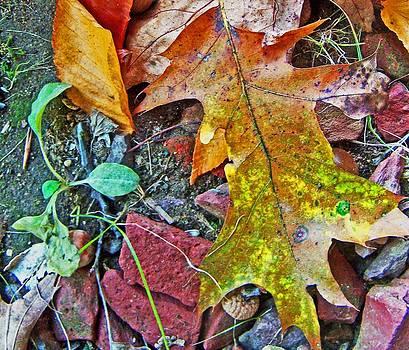 Patricia Taylor - Brillian Autumn Designs