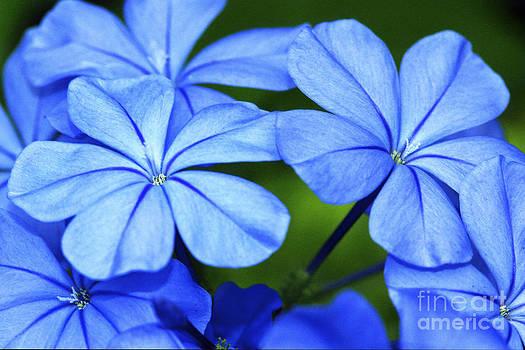 Brilliant Blues II by Pamela Gail Torres
