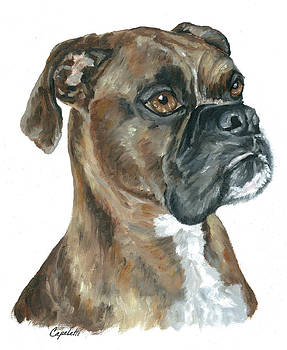 Brindle Boxer Portrait by Barb Capeletti