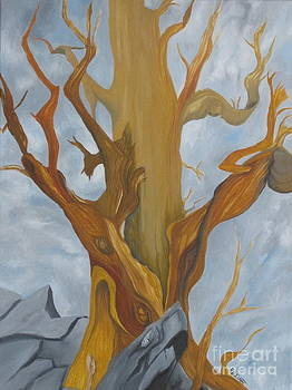 Bristelcone Pine Tree study #4 by Richard Dotson