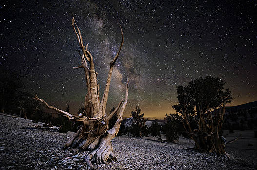 Bristlecone Pine and the Milky Way by Keith Marsh