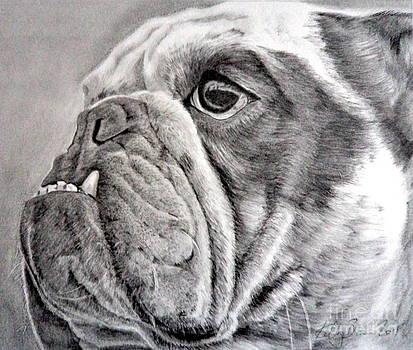 British Bull-Dog by Skyrah J Kelly
