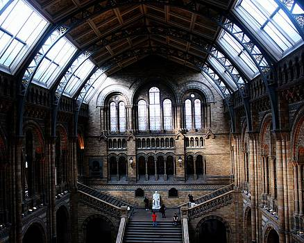 British Museum of Natural History by Michael Tipton