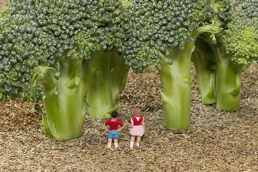 Broccoli Forest by Tony Sullivan